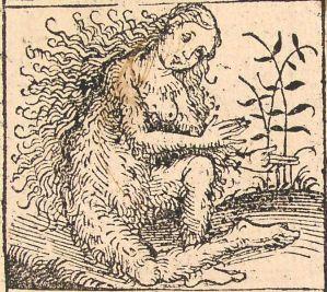 Femme sauvage, illustration de la Chronique de Nuremberg (1493) (source)